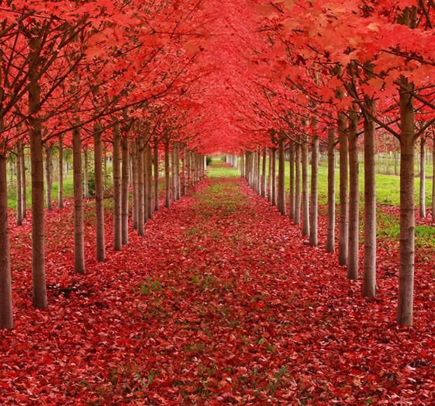 As 16 árvores Mais Lindas Do Mundo!
