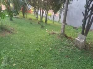 terreno terreno Vila Pomar