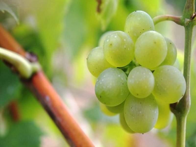saúde 5 frutas e receitas que ajudam a evitar gripes e resfriados
