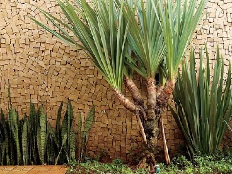 paisagismo 10 espÉcies de plantas que trazem sorte